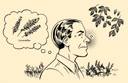 konsantrasyon egzersiz adam kokulu bitkiler flora illüstrasyon